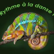 Atelier Du rythme à la danse folk (1/3): «Enfin libres dans vos valses à 5 temps»